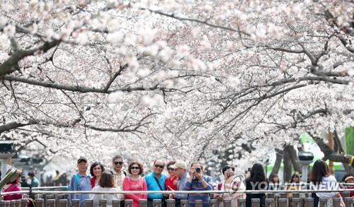 벚꽃 추억