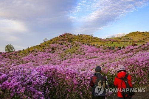 황매산[연합뉴스 자료사진]