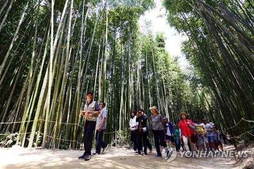 담양대나무축제 현장[연합뉴스 자료사진]