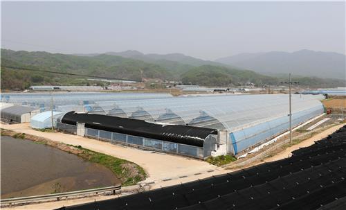 마현1리 현대식 시설재배 농가