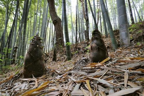 [연합이매진] 담양대나무축제
