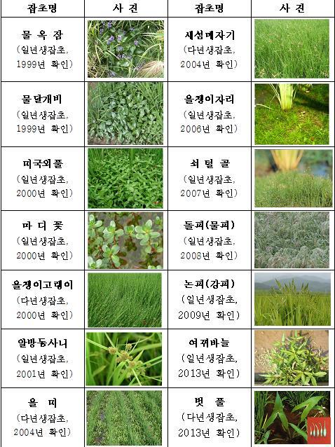 제초제 저항성 잡초 14종 [농촌진흥청 제공=연합뉴스]