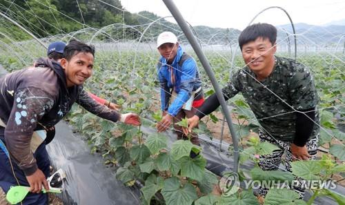 외국인 계절근로자 [연합뉴스 자료사진]