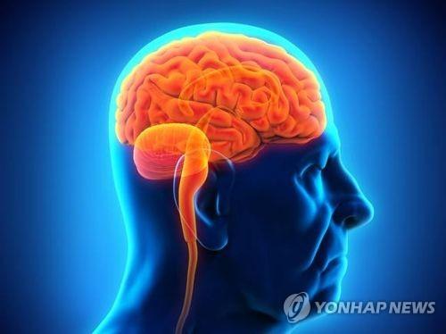 인간의 뇌가 포유류의 6배에 달하는 이유는?