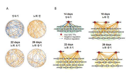 식물의 노화 속도 조절 유전자 네트워크 찾았다