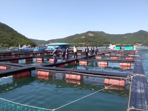 경남 양식수산물재해보험 확대…'적조·고수온 피해 대비'