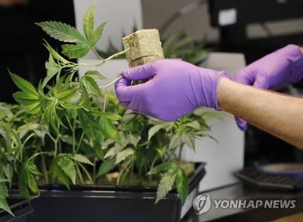 미국 일리노이주, 의료용 마리화나 접근성 확대