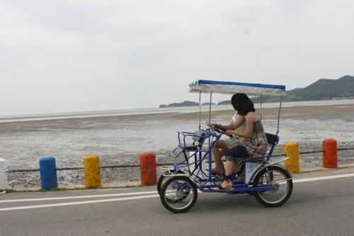 신안 증도서 자전거 빌려 타고 바다와 갯벌 둘러보자