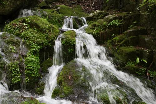 원시림 숲 속으로 오세요…진안 운장산 자연휴양림