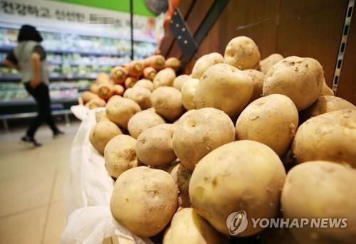 감자 [연합뉴스 자료 사진]