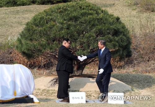 남북 정상이 심은 소나무[연합뉴스 자료사진]