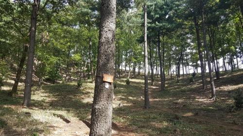 양평 국립하늘숲추모원 모습 [산림복지진흥원 제공=연합뉴스]