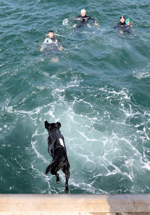 14일 부산 영도 부산해경 전용부두에서 다이빙 훈련하는 투투