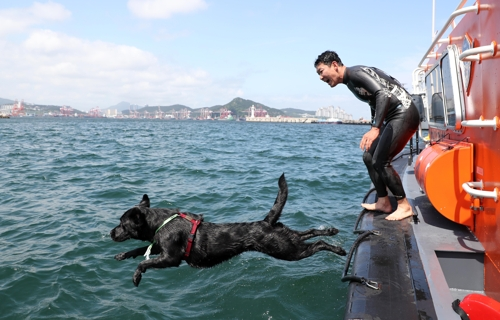 14일 부산해경 전용부두에서 바다로 뛰어드는 투투.