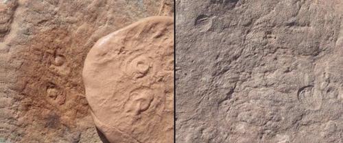 5억년 전 해양생물에 오바마 이름 딴 학명 '오바무스' 부여