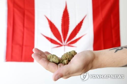 캐나다 10월 마리화나 합법화 앞두고 관련업체 주가 급등