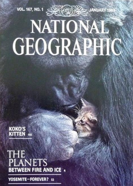 고릴라 코코가 고양이 품에 안은 내셔널지오그래픽 표지