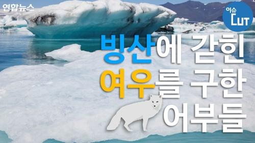[이슈 컷] 빙산에 갇힌 여우를 구한 어부들