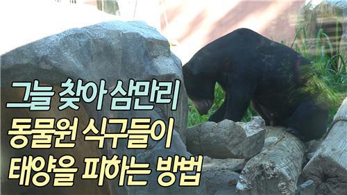 [VR] 수영하는 '불곰'·머드팩하는 '코뿔소'…폭염속 동물원 표정