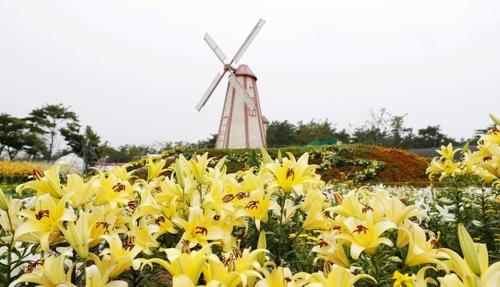 26일부터 태안 네이처월드에서 백합꽃축제