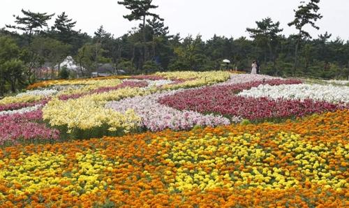 태안 백합꽃축제 전시장의 모습