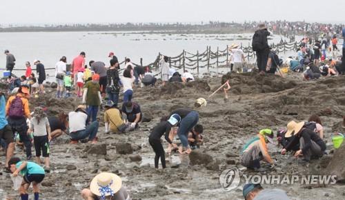 신비의 바닷길에서 해산물을 잡는 관광객들