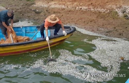 죽은 빙어 걷어내는 어민들 [연합뉴스 자료사진]