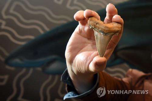2천500만년 전 상어 이빨 화석