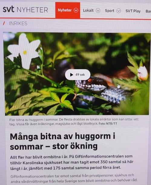 기후변화의 역습?…스웨덴, 최악 산불 이어 독사 피해 급증