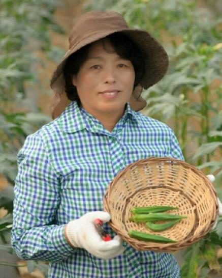 고추와 흡사한 아열대 채소 '오크라'