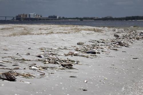 美 플로리다 해양생물 떼죽음 독성 적조현상에 비상사태 선포
