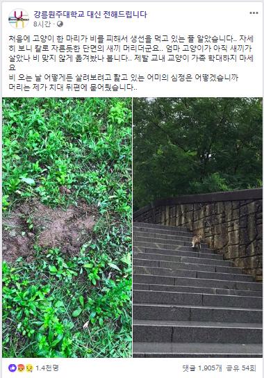 """강릉 한 대학에서 새끼고양이 머리만 발견…""""칼로 자른 듯"""""""