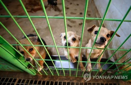 폭염속 최악 수난시대…올여름 버림받은 반려동물 5배 급증