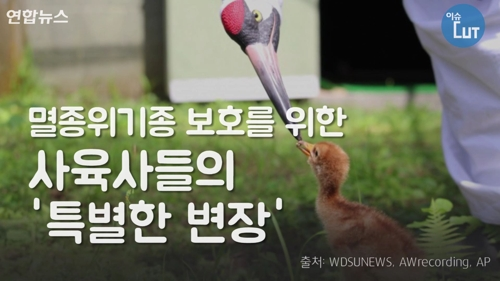 [이슈 컷] 멸종위기종 보호를 위한 사육사들의 '특별한 변장'