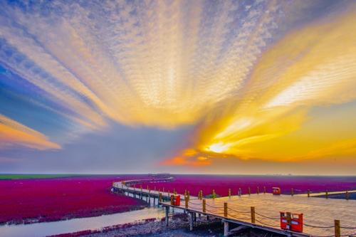 올림픽 챔피언들, 붉은 해변의 아름다운 습지 모습에 감탄