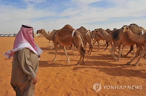 사우디아라비아 사막의 낙타[EPA=연합뉴스 자료사진]