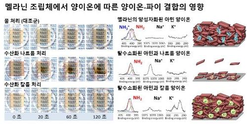 양이온이 양이온-파이결합에 미치는 영향