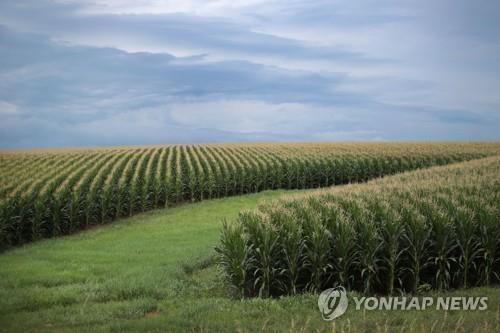 미국의 농장[AFP=연합뉴스 자료사진]