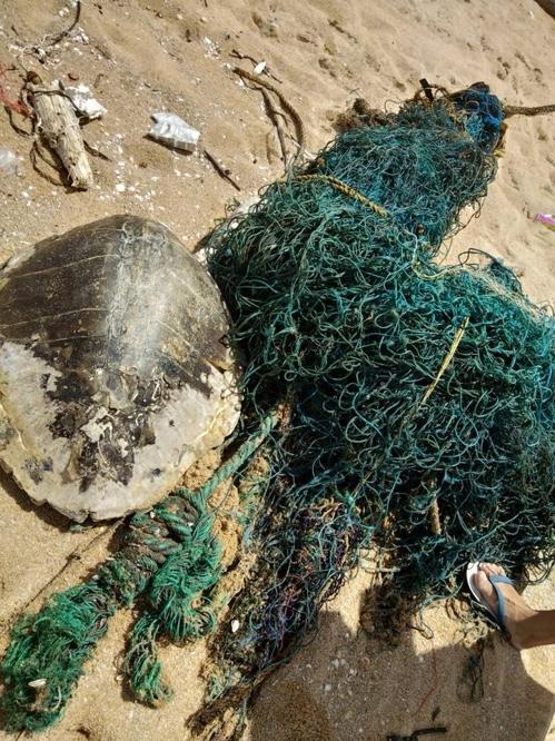태국 해변의 쓰레기 더미에서 죽은 바다거북[페이스북 캡처=연합뉴스]