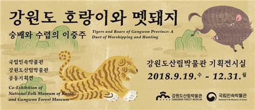 호랑이와 멧돼지 숭배·수렵의 이중주…강원도산림박물관 기획전