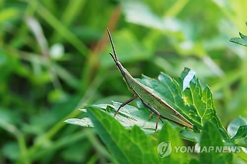 대구 봉무나비생태원서 '가을 풀벌레 특별전'