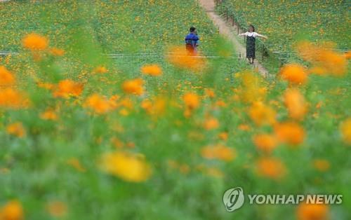 [날씨] 추석연휴 첫날 전국 화창…새벽 귀성길 안개 주의