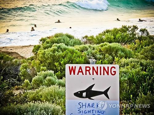 상어 출몰·공격에…호주 당국, 갈고리 상어사냥 논란