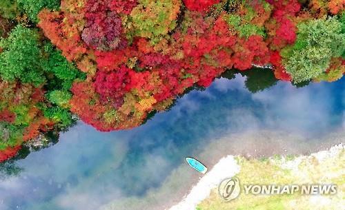 철암 단풍군락지 [연합뉴스 자료사진]