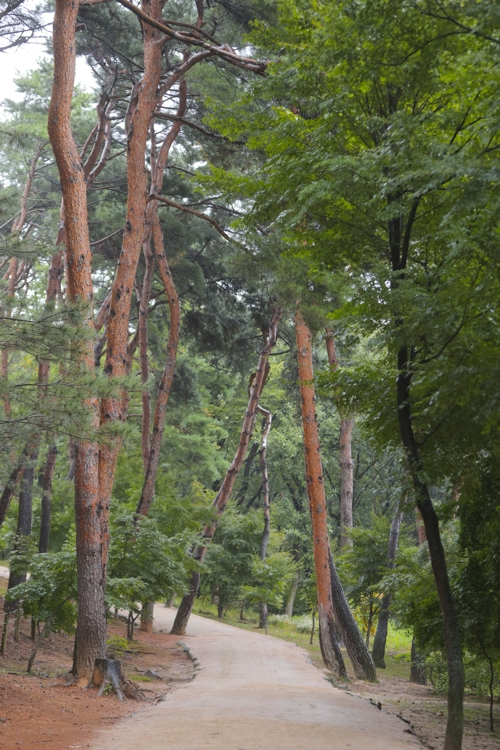 [길따라 멋따라] 도토리 떨어지는 소리…서삼릉·서오릉 나들이