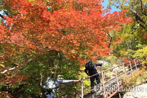 가을 정취에 풍덩…절정 이룬 단풍 구경 탐방객으로 붐벼