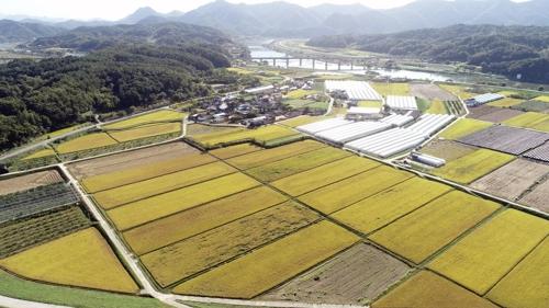 [카메라뉴스] 황금빛 가을…넉넉해진 농촌 풍경