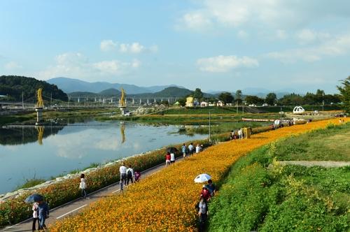 [주말 N 여행] 호남권: 10억 송이 꽃에 가을색으로 물든 장성 황룡강변