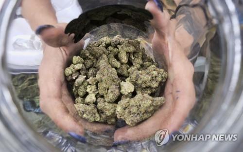 """마리화나 합법화 앞둔 캐나다, 15세 이상 15% """"석달 새 흡연"""""""