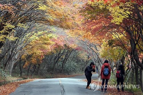 가을옷 갈아입기 시작한 무등산…주말께 첫 단풍 관측 예상